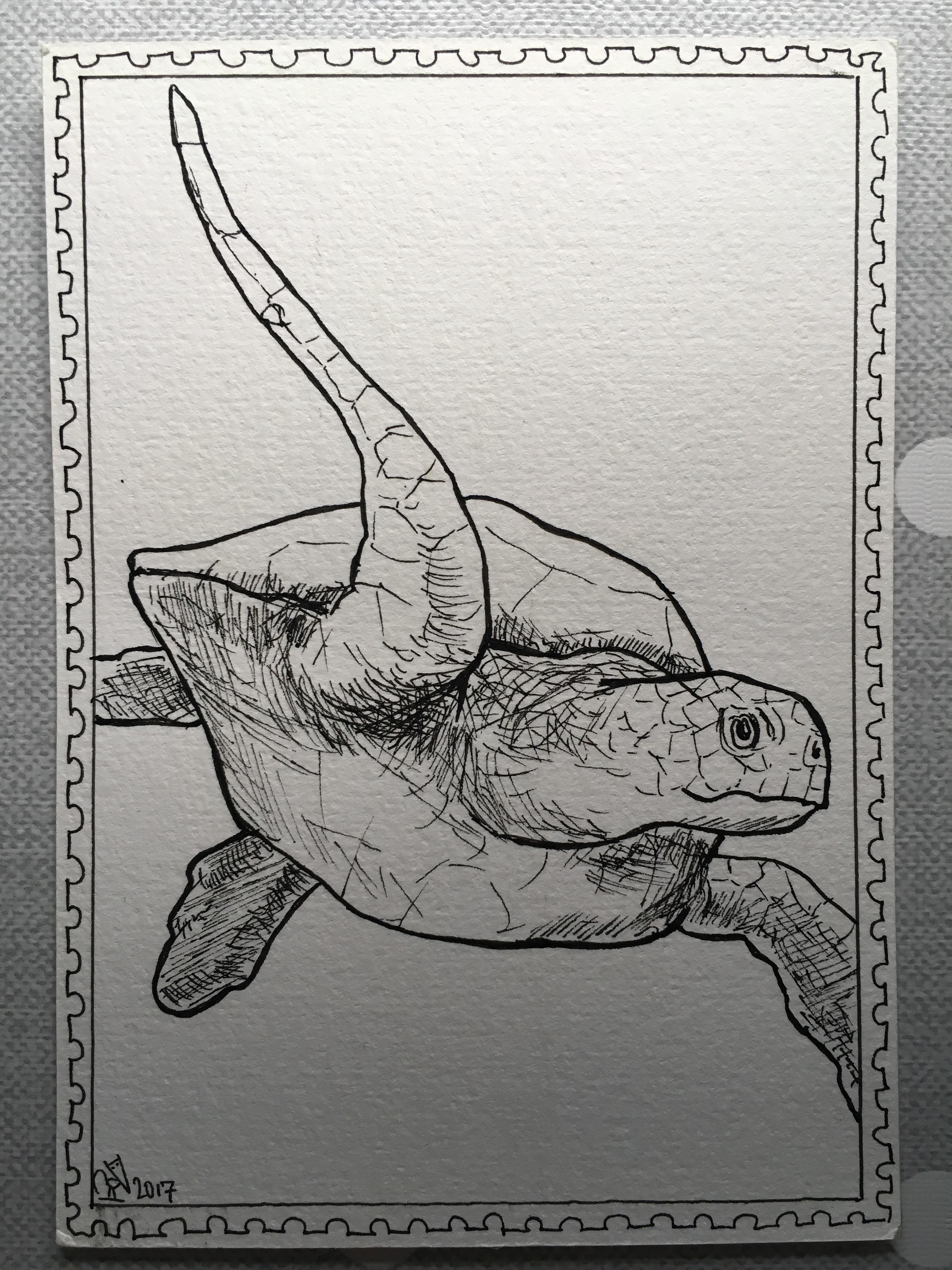 Heleen de Vaan_turtle2