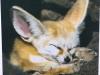 Patricia Shade_fox